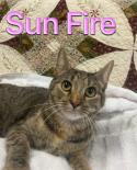 Photo of Sun Fire