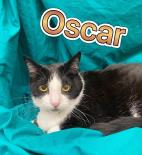 Photo of Oscar
