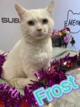 Photo of frost