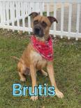 Photo of Brutis