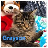 Photo of Grayson