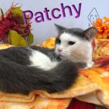 Photo of patchy