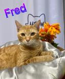 Photo of Fred