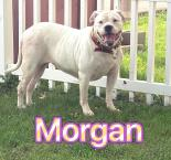 Photo of Morgan