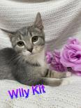 Photo of Wily-Kit