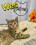 Photo of Wes