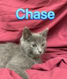 Photo of Chase