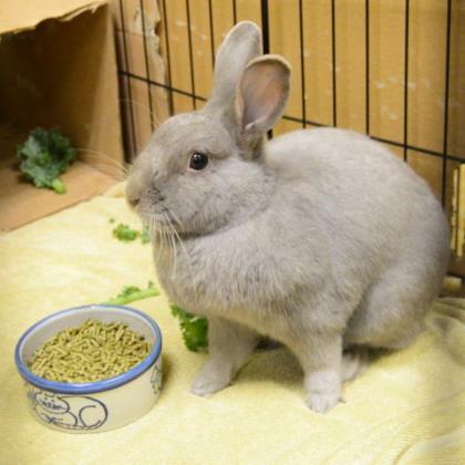 Thumper w/ Penelope