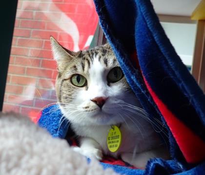Kat - Spirit Cat - Special Medical Needs