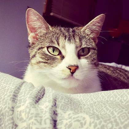 Adopt - Dakin Humane Society