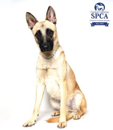 Adopt A Dog Central California Spca Fresno Ca