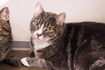 Cats – Seattle Humane