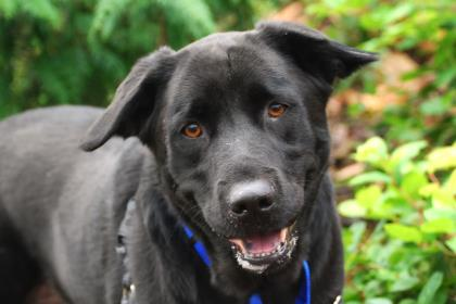 Seattle Humane – Saving Lives, Completing Families
