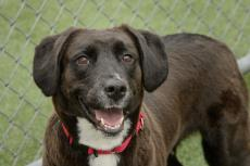 Dog and Puppy Adoptions | Cleveland Animal Protective League