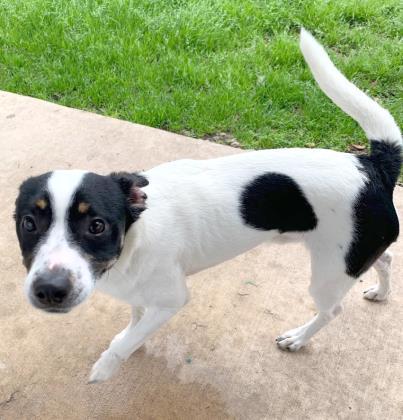 Pet Details Dorothy O Connor Pet Adoption Center