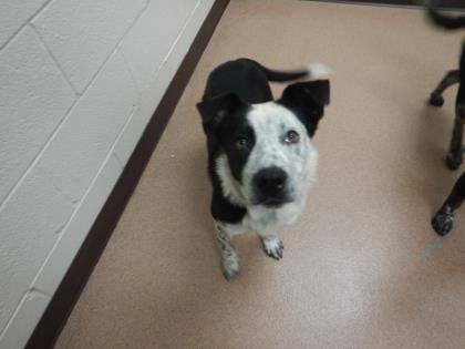Boulder Humane Society Dogs For Adoption