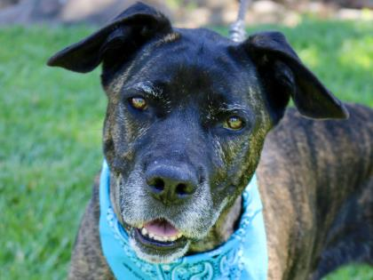 Dogs Available for Adoption | Humane Society of Boulder Valley
